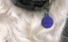 Chatham-Kent dog tag. (Photo courtesy of Myriam Armstrong, Pet And Wildlife Rescue)