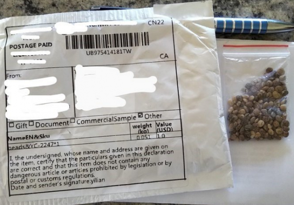 Unmarked seeds sent through the mail. Photo courtesy of the Canadian Food Inspection Agency.