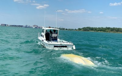 Five people rescued from capsized boat on Detroit River