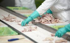 Close up of poultry processing. © Can Stock Photo / PicsFive