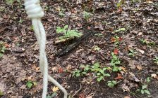 A noose found in Warbler Woods in London, September 7, 2020. (Photo courtesy of Sara MacDonald via Twitter)